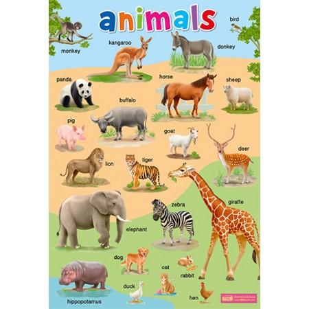 โปสเตอร์พลาสติก Animals