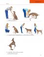 ฝึกสุนัข ฉบับสมบูรณ์
