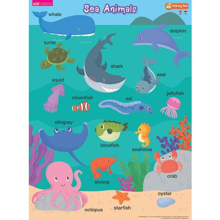 โปสเตอร์พลาสติก - Sea Animals